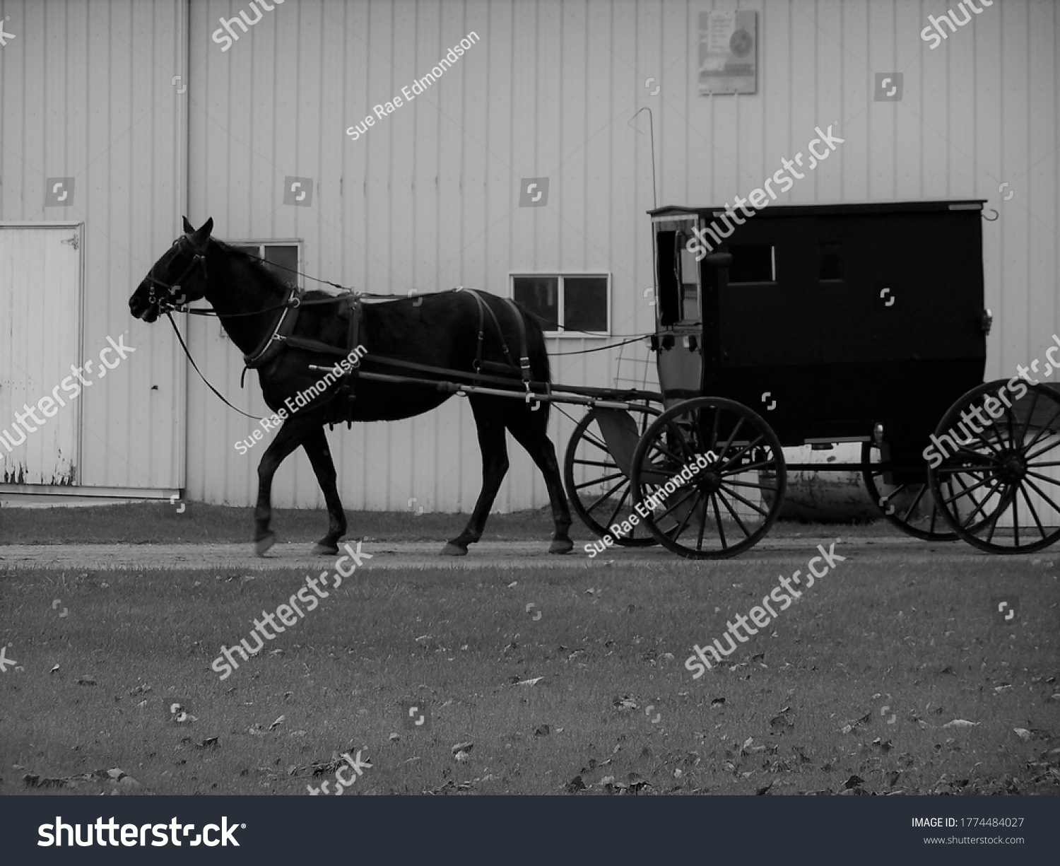 stock-photo-amish-horse-and-buggy-outsid