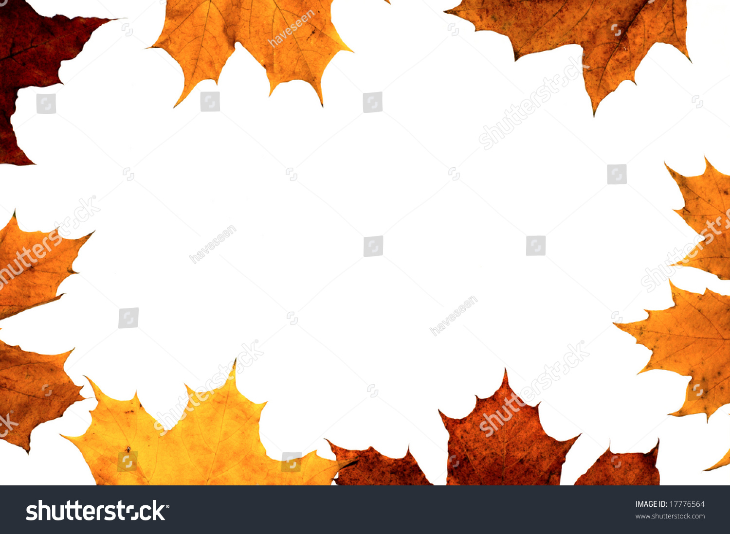 Autumn Maple Leaf Frame Background Stock Photo (Edit Now) 17776564 ...
