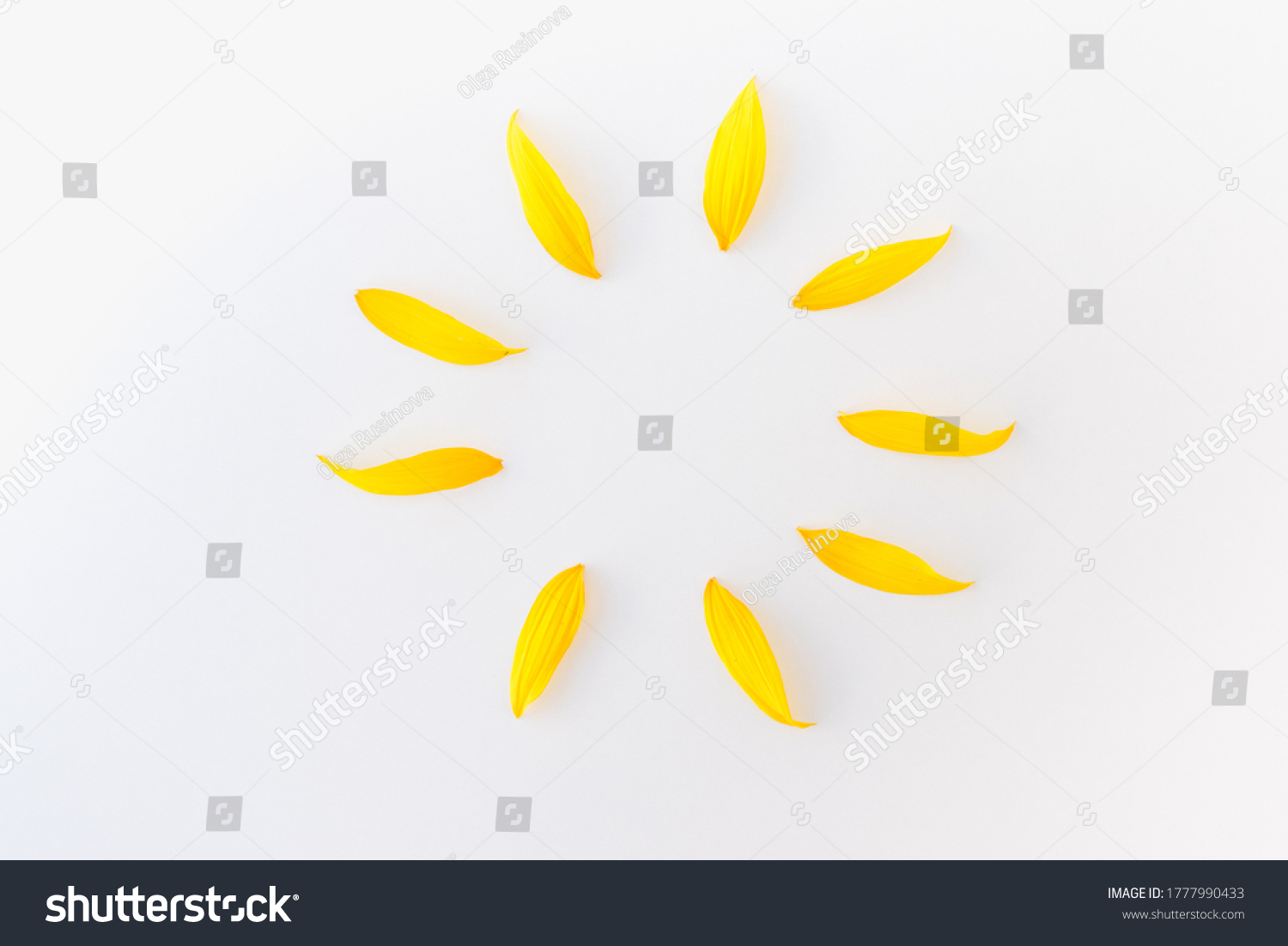 sunflower petals, yellow petals on white background, sun from sunflower petals, background with yellow petals #1777990433