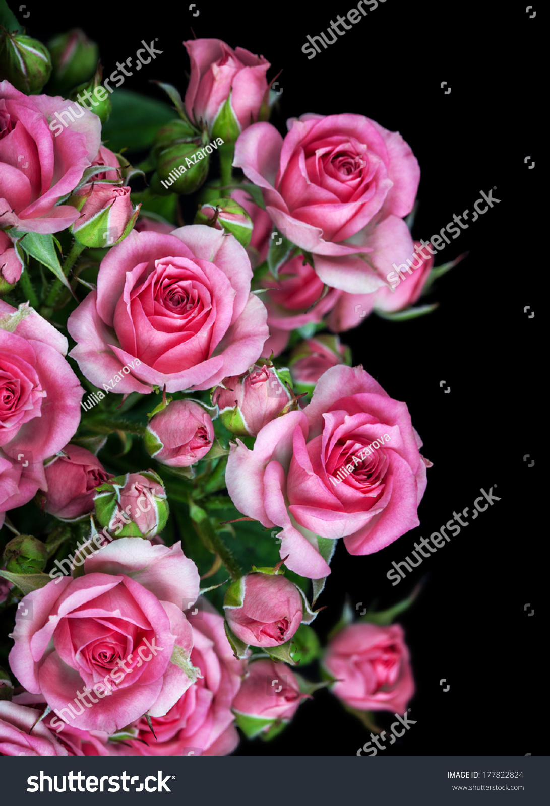 Big Pink Roses Bouquet Flowers Free Stock Photo (Edit Now) 177822824 ...