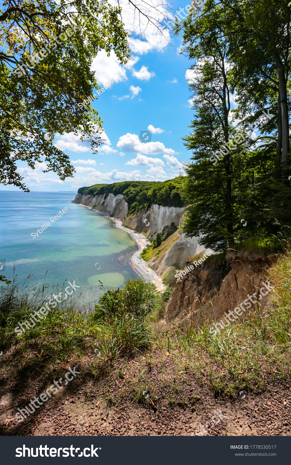 stock-photo-chalk-cliffs-framed-by-trees