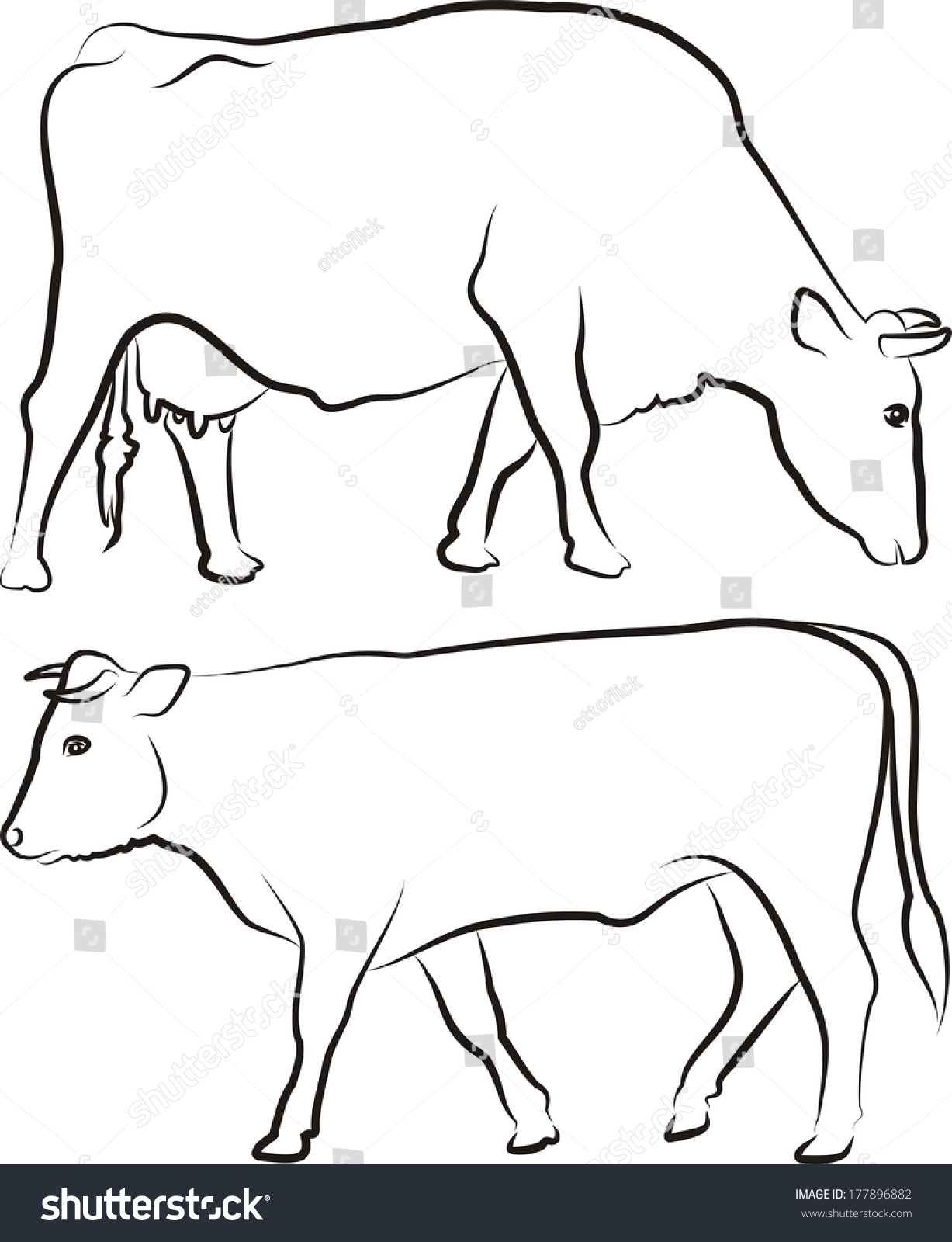 cow bull outlines stock vector royalty free 177896882 shutterstock