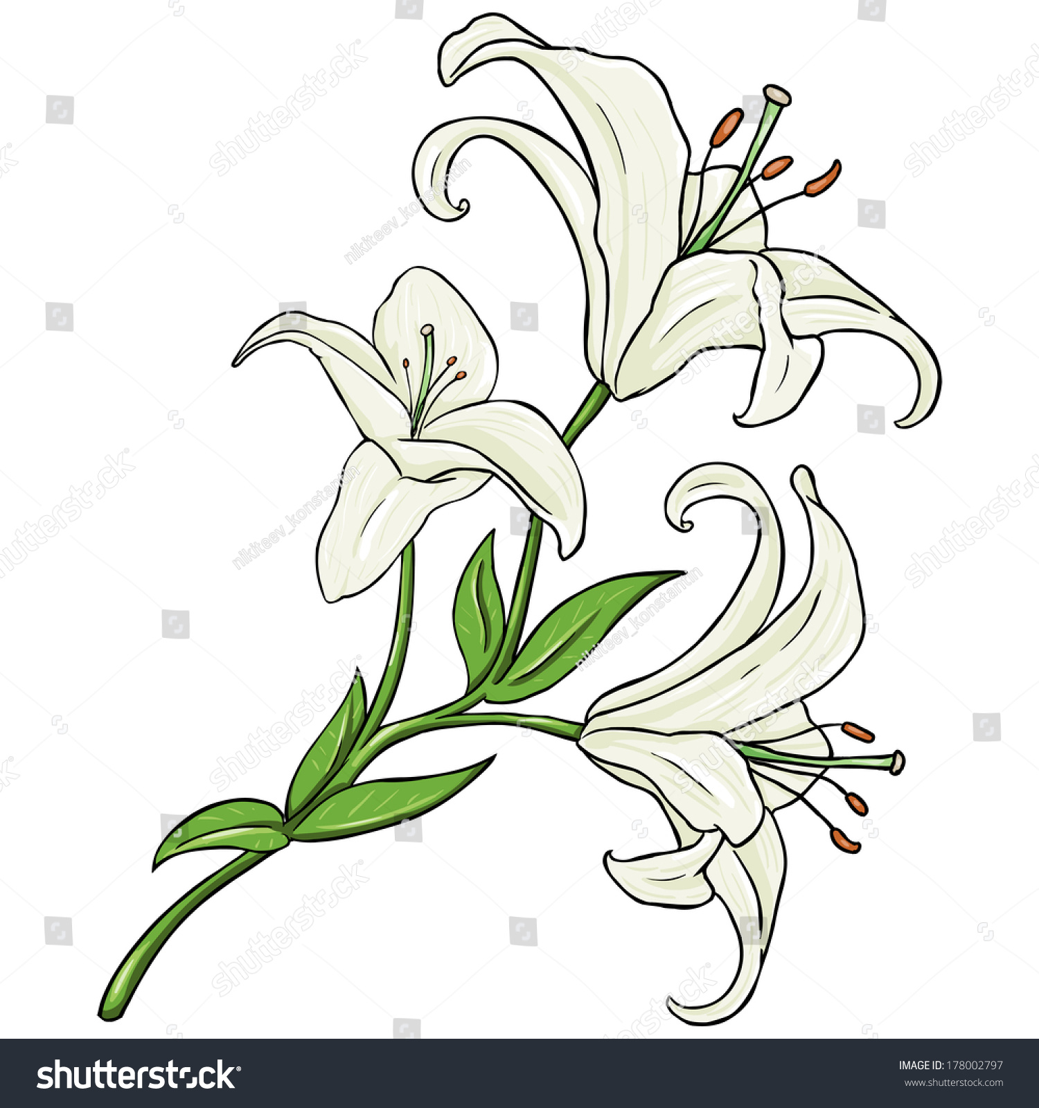 Vector cartoon isolated illustration white lily stock vector vector cartoon isolated illustration white lily izmirmasajfo