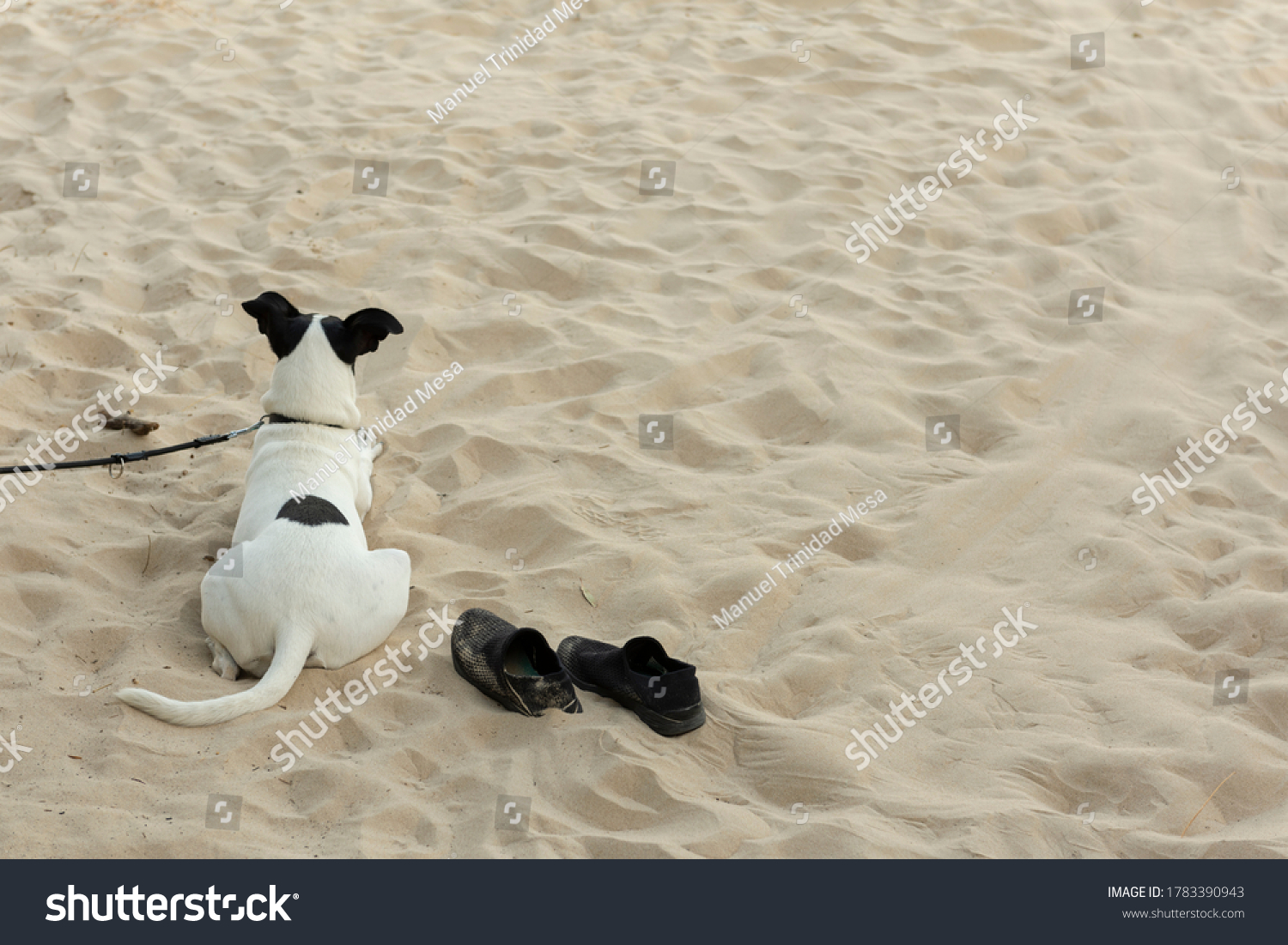 A dog on the beach watches over his master's shoes