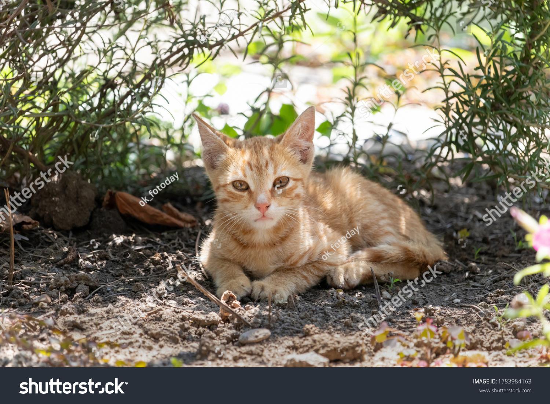 stock-photo-ginger-kitten-resting-in-the