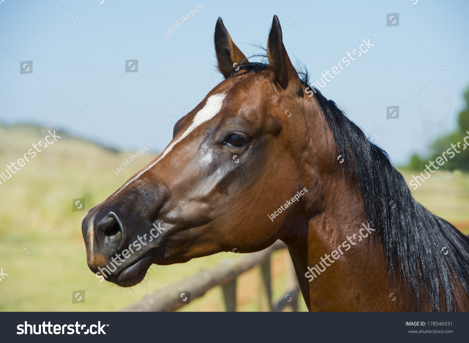 quarter horse head pictures - photo #14