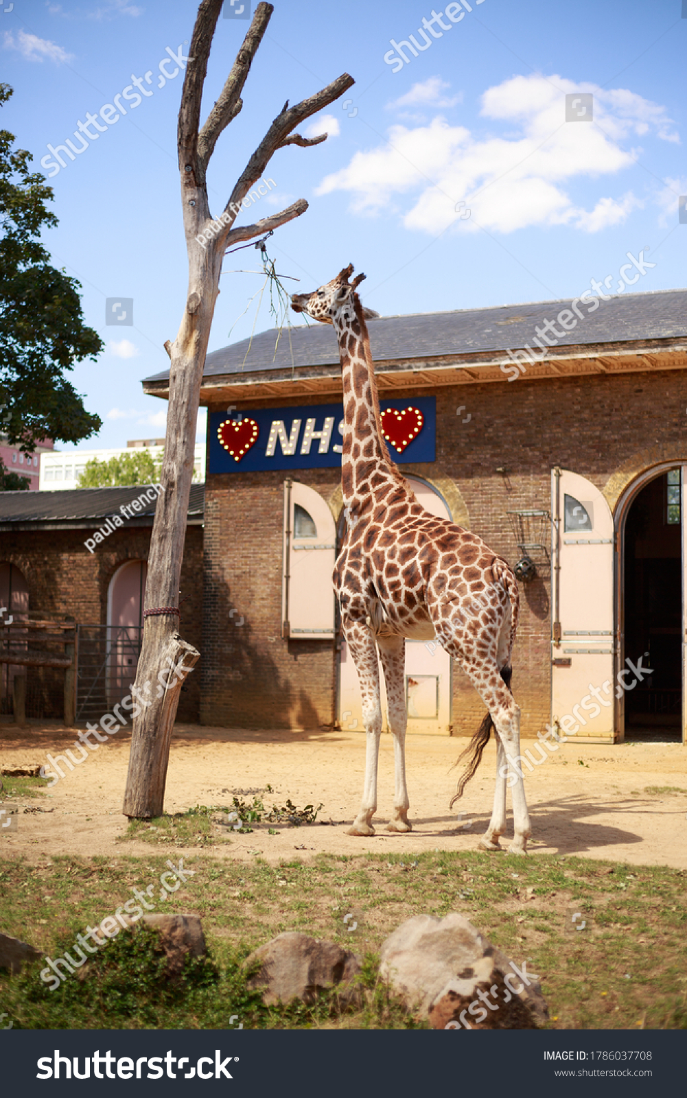 Giraffe House, London zoo, UK, 2020. The giraffe house has been decorated with a sign we love the NHS, this is to thank the NHS during the Covid 19 outbreak,