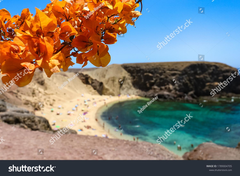 stock-photo-orange-bougainvillea-flowers