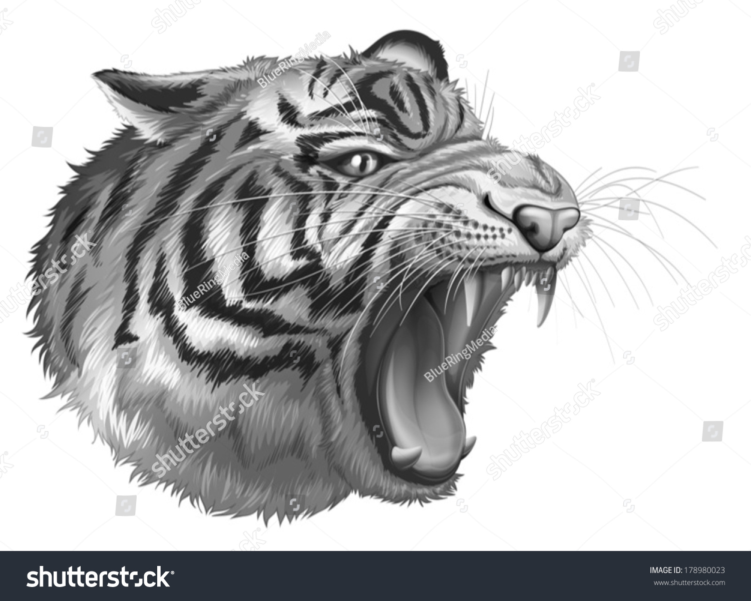 illustration grey tiger roaring on white stock vector 178980023