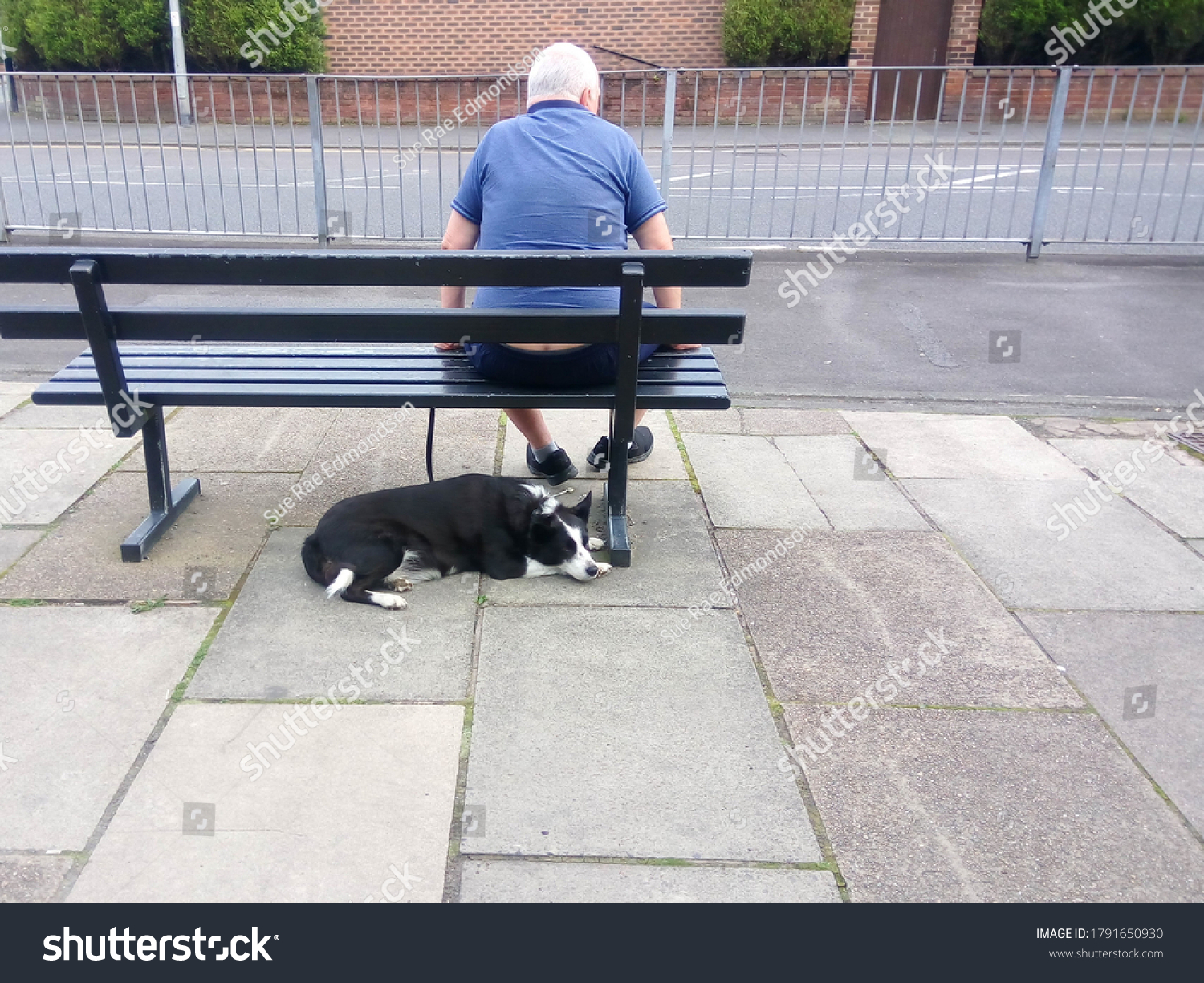 Mature man and his dog sat isolated on a bench as corona virus hits the elderly the hardest with copy space