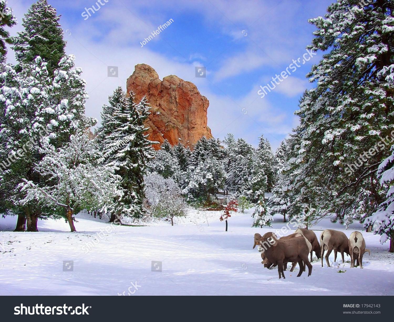 Big Horn Sheep Glen Eyrie Near Stock Photo 17942143 Shutterstock