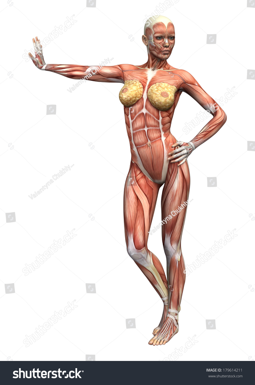 Female Anatomy Figure Image collections - human body anatomy