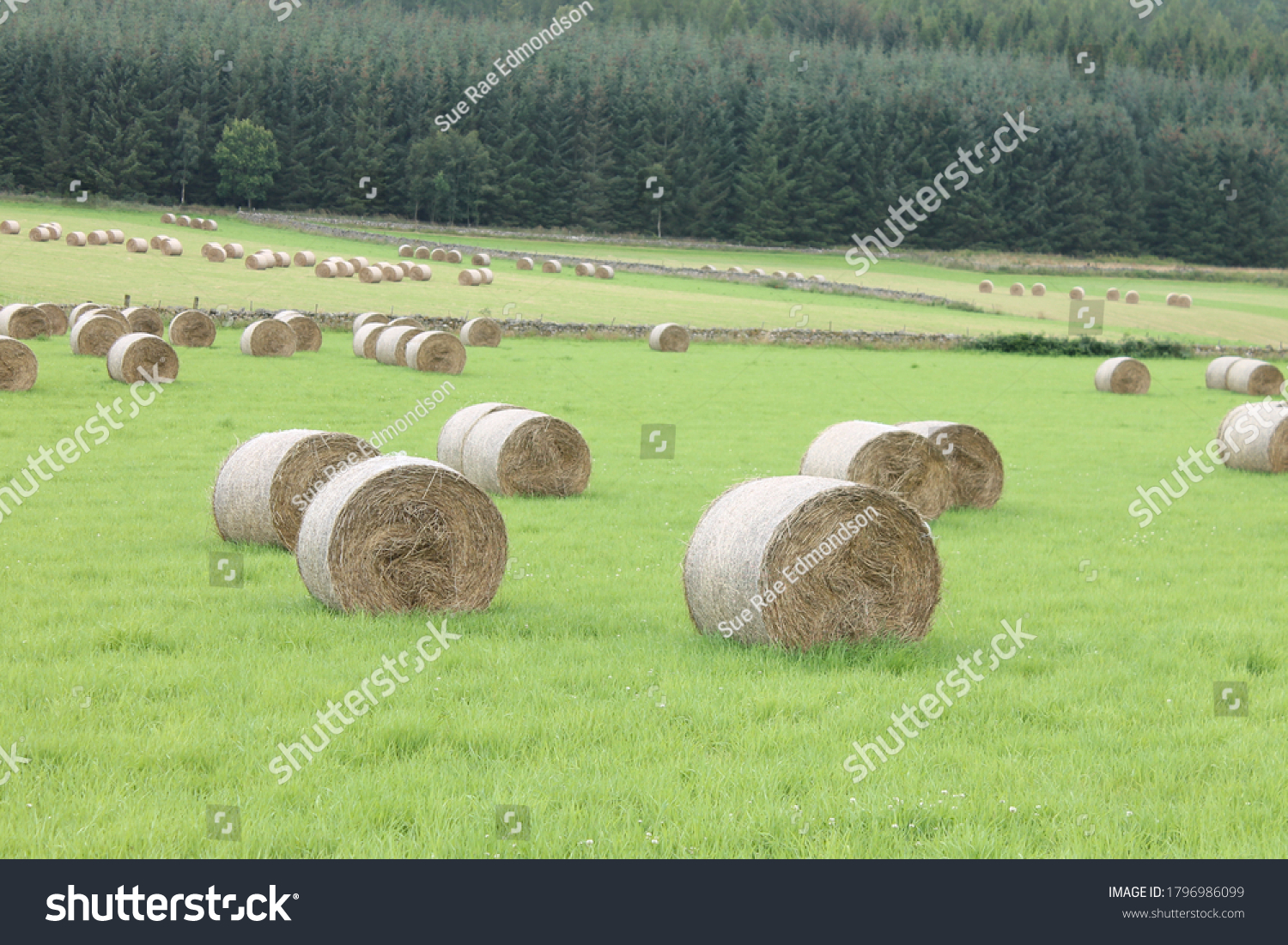 stock-photo-hay-bales-in-a-field-with-fo
