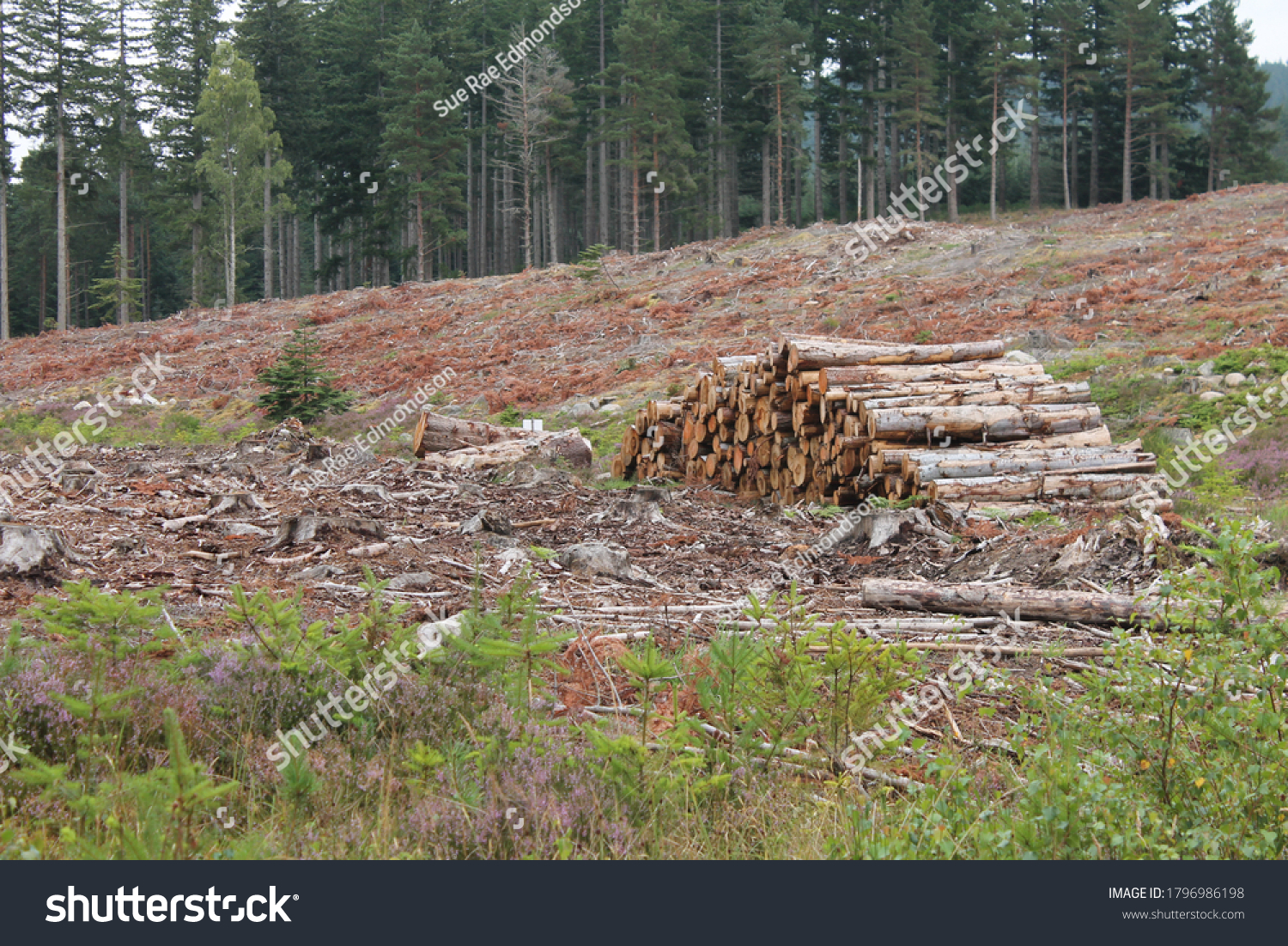 Vivid image of deforestation of Scotland