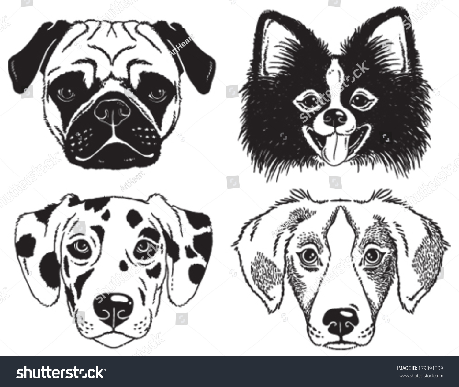 Pug Face Line Drawing : Set dogs faces pug chihuahua stock vector