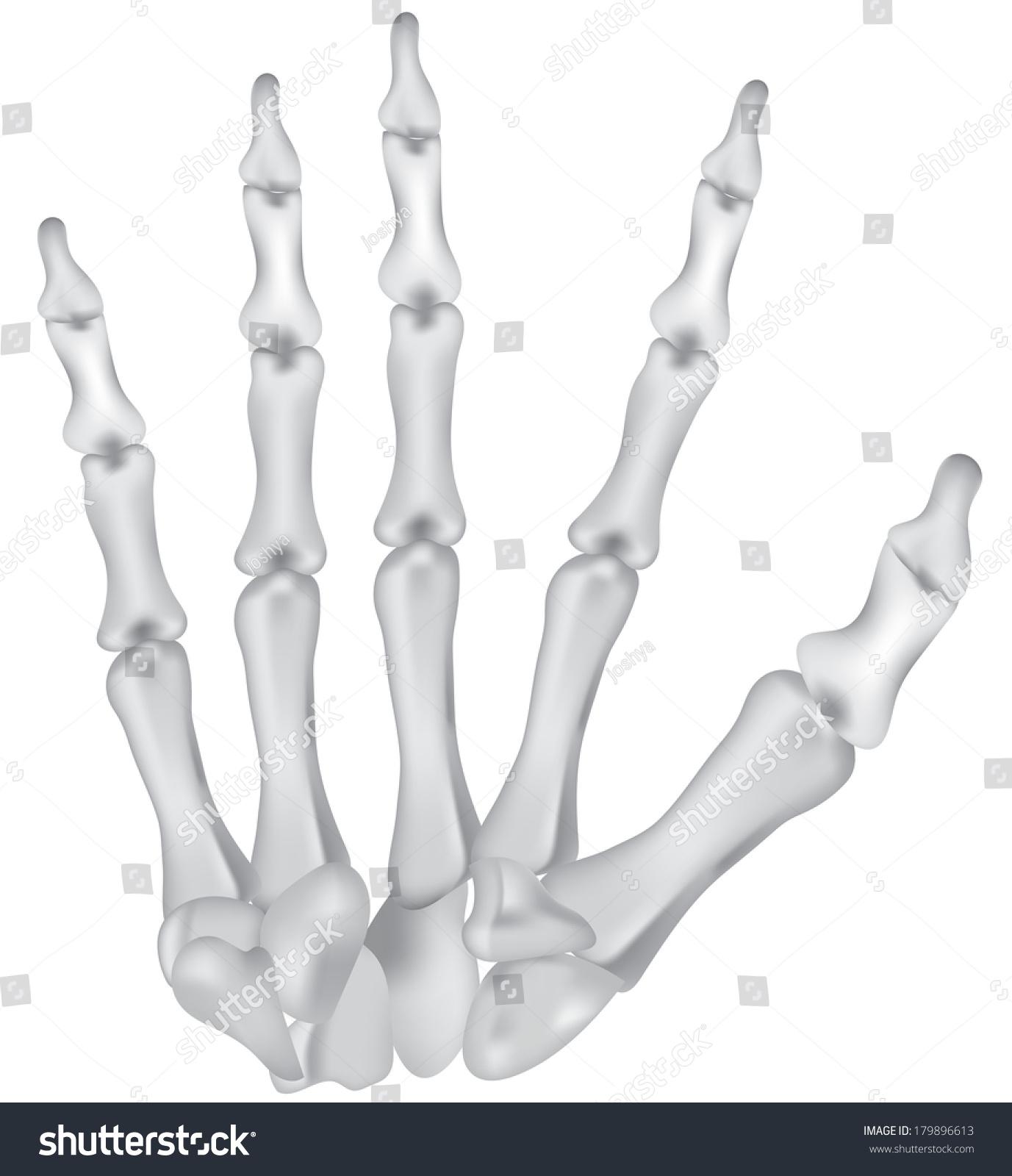 Royalty Free Stock Illustration Of Hand Bones Diagram Carpals Stock
