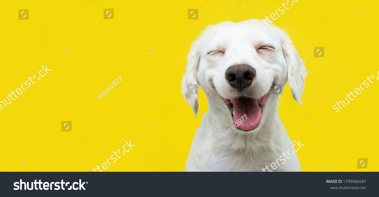 Happy puppy dog smiling on isolated yellow background. #1799966587