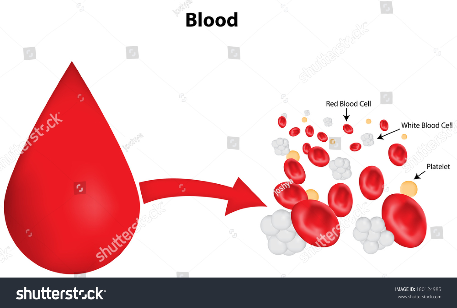 Labeled Blood Drop Diagram Stock Vector 180124985 - Shutterstock