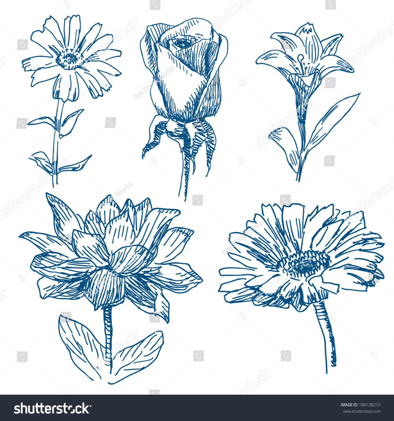 Different Flowers Drawings Set Isolated On Stock Vector Royalty
