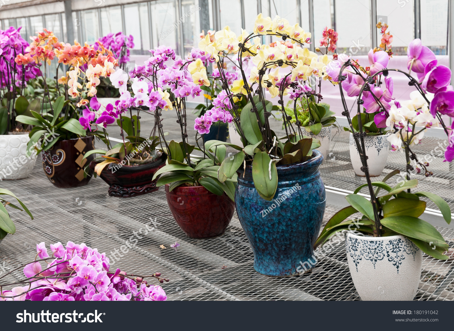 Butterfly Orchid Bonsai Stock Photo Edit Now 180191042