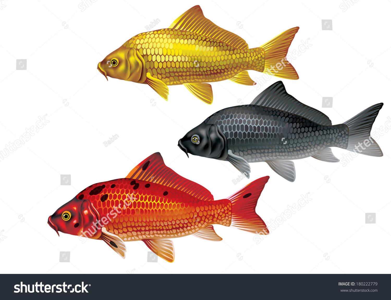 Koi Carp Gold Red Black Cyprinus Stock Vector 180222779 - Shutterstock