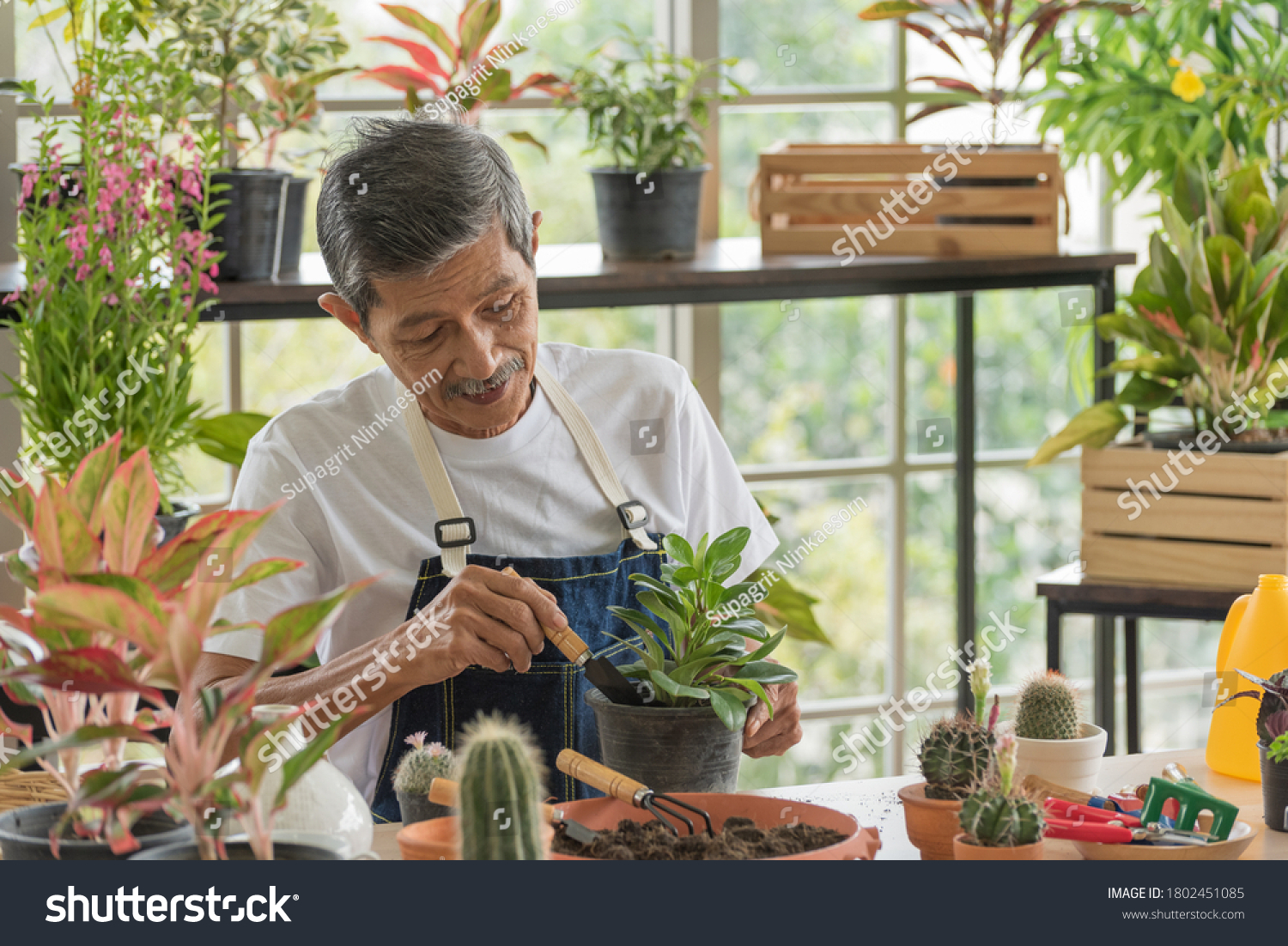 Senior asian retirement old man in casual outfit doing a hobby with happy and relax gardening tree plant in greenhouse garden farm #1802451085