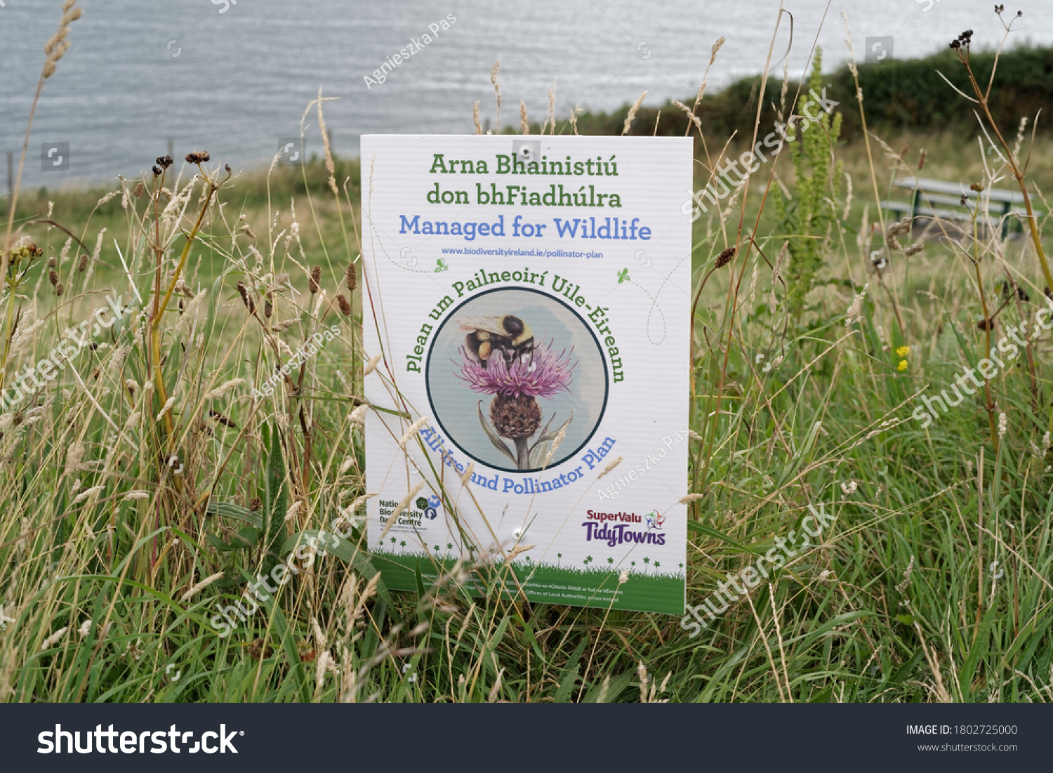 """BRAY, CO. WICKLOW, IRELAND - AUGUST 02, 2020: """"Managed for Wildlife"""" signage in meadow. Text in Irish and English. All-Ireland Pollinator Plan is an action to save pollinators. Irish Sea in background"""
