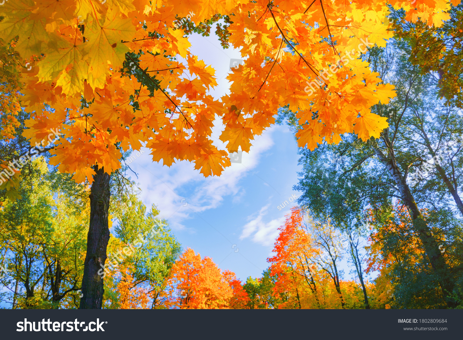 Autumn background landscape. Yellow color tree, red orange foliage in fall forest. Abstract autumn nature beauty scene October season sun heart shape sky Calm season life feel. Fall nature tree leaves #1802809684