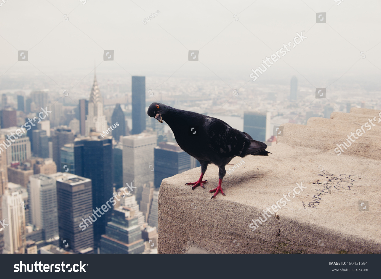 Dove on the roof in New York. New York Downtown skyline and lonely pigeon on the roof looking at camera. A lot of space for text. Copy space.