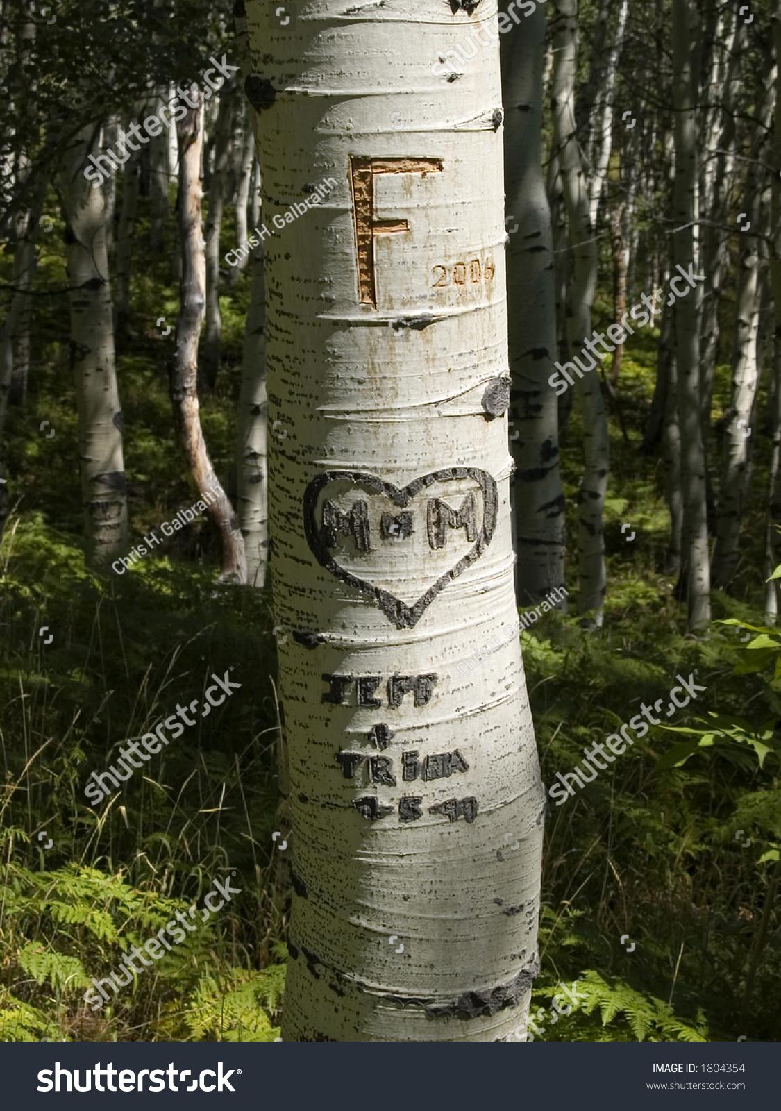 Aspen carvings stock photo  shutterstock