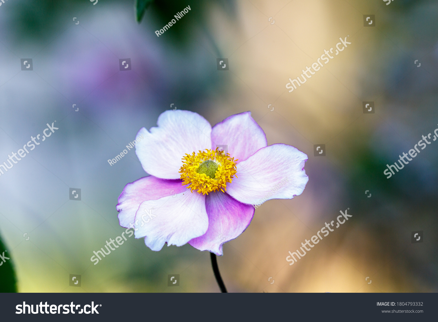stock-photo-blooming-flower-in-the-garde