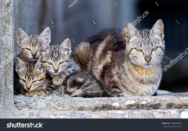 stock-photo-adorable-family-of-stray-cat