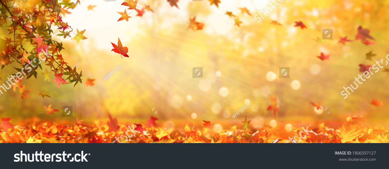 autumn tree in idyllic beautiful blurred autumn landscape panorama with fall leaves in sunshine, advertising space on leaf ground, day outdoors in golden october
