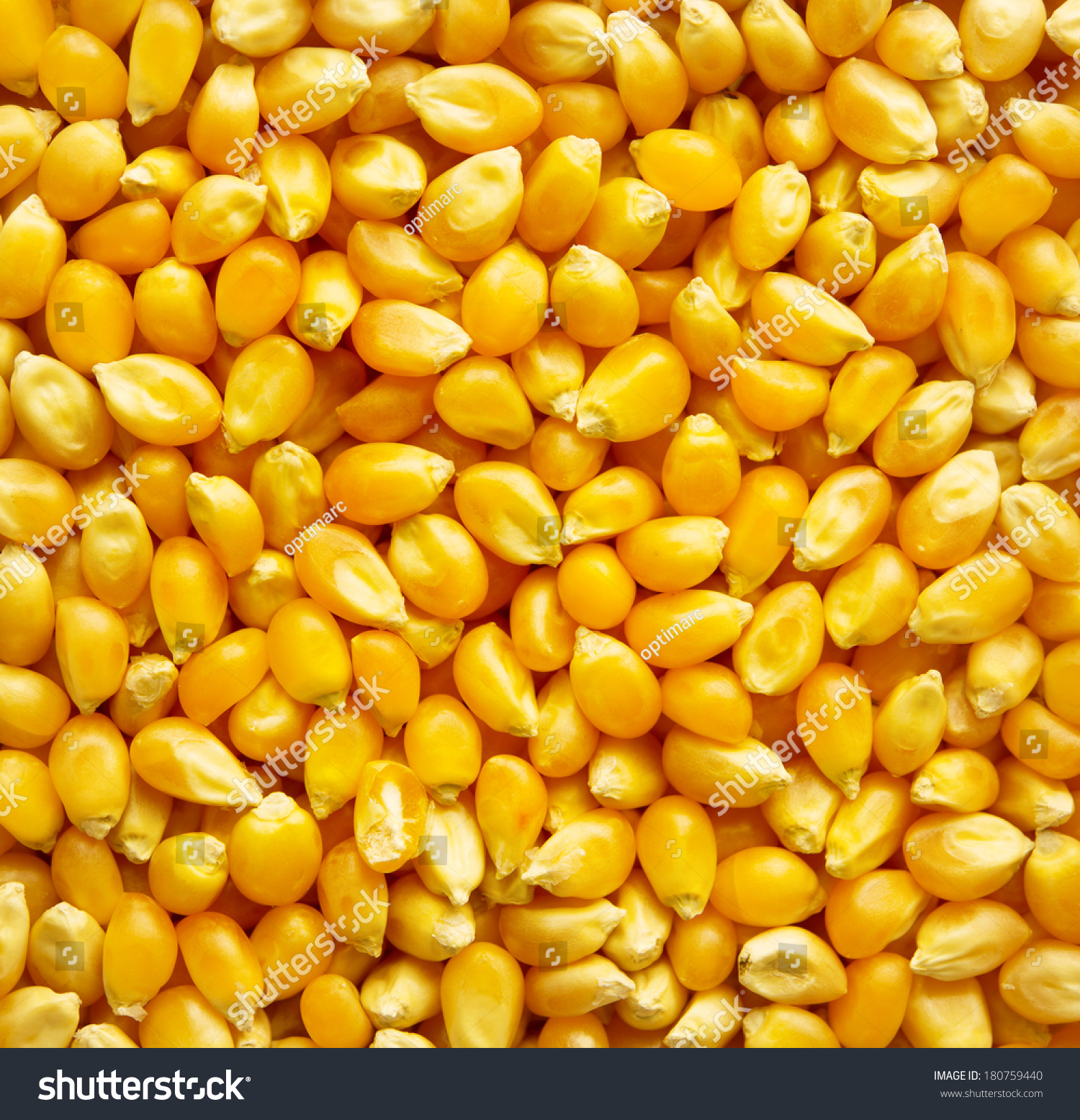 Dried corn kernels unpopped popcorn kernels stock photo 180759440 dried corn kernels or unpopped popcorn kernels ccuart Choice Image