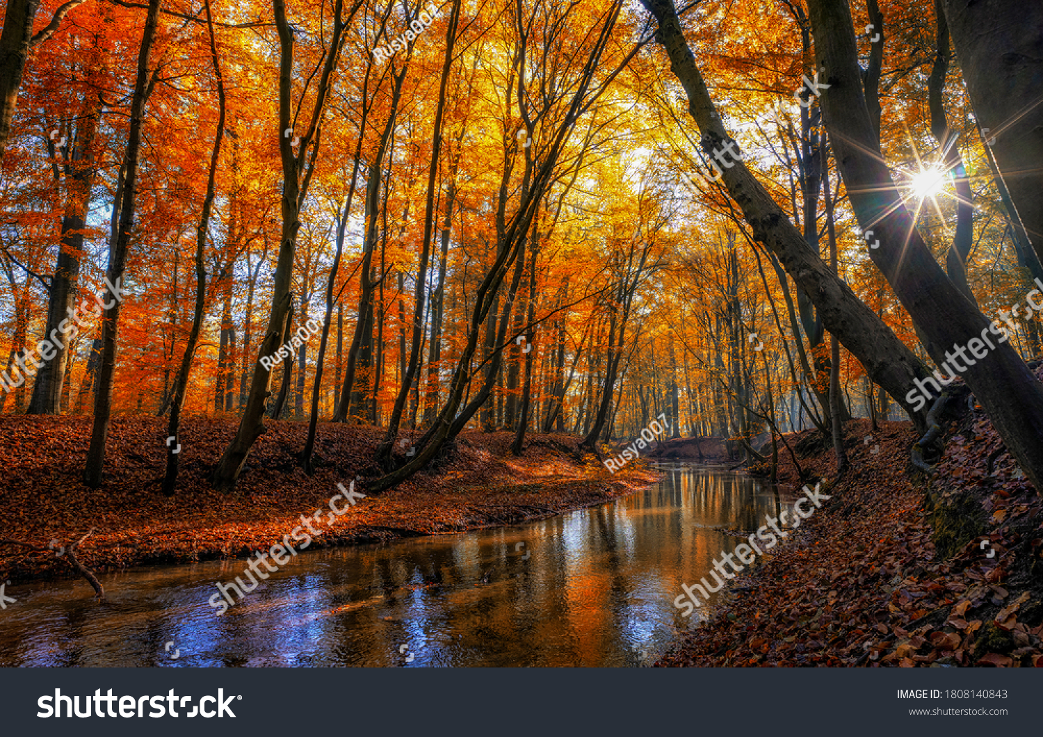 Autumn river creek stream in woods. Forest trees landscape woodland fall #1808140843