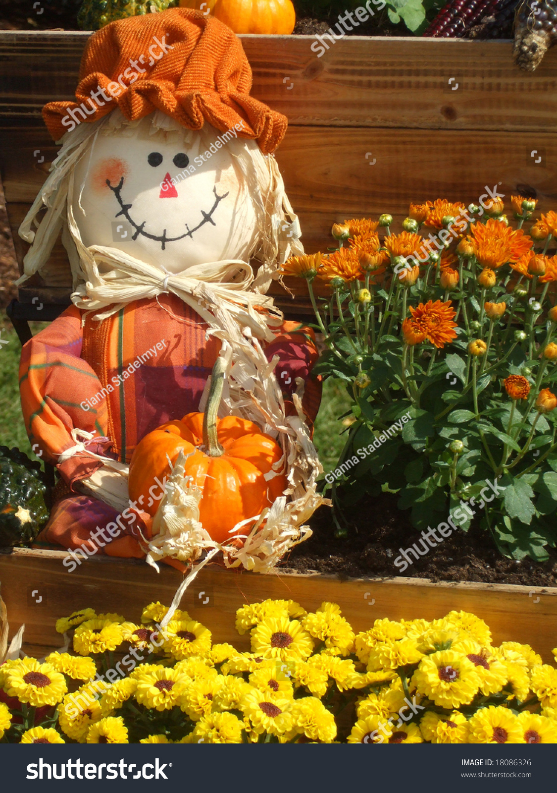 Smiling Scarecrow Holds Pumpkin Among Wagon Stock Photo