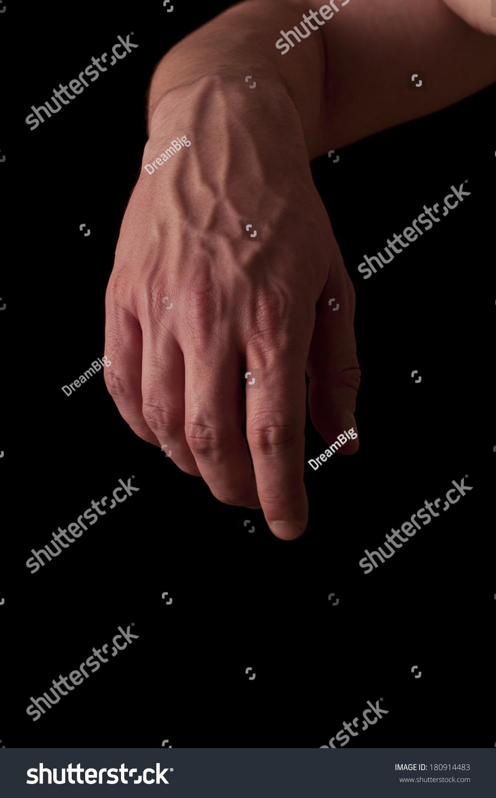 Human Anatomy Series Dorsal Side Fist Stock Photo Edit Now