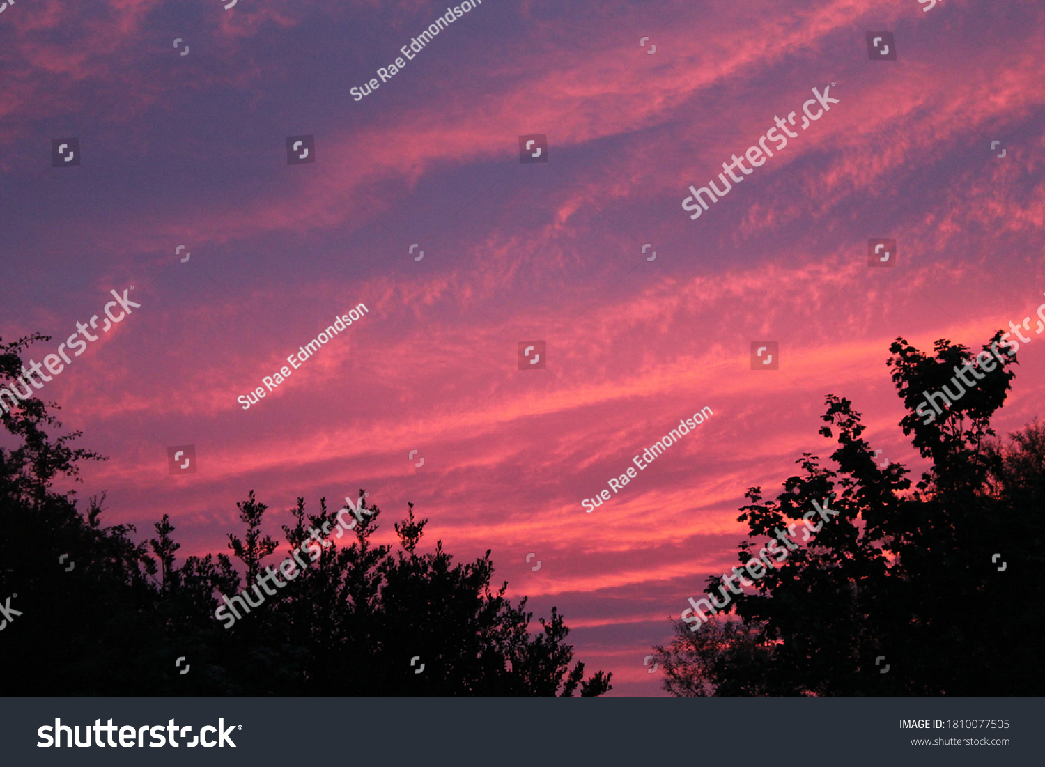vivid sky in pink, blue and purple colours with silhouette tree tops