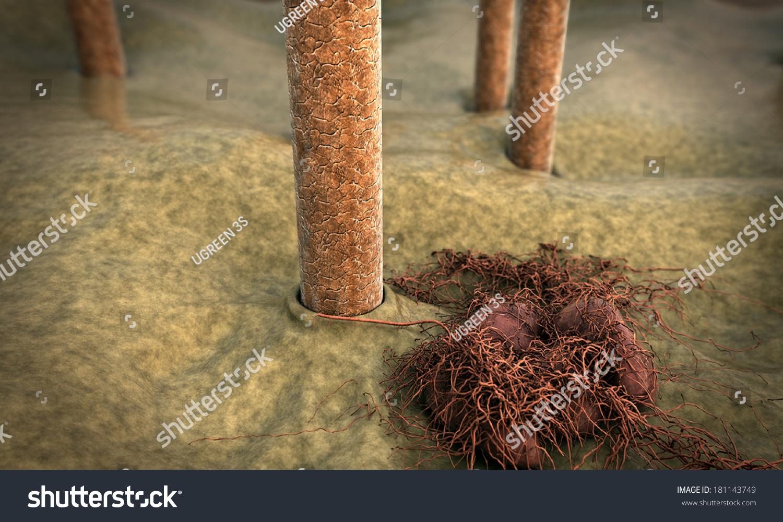 Hair Fungus Skin Under Microscope Image Stock Illustration