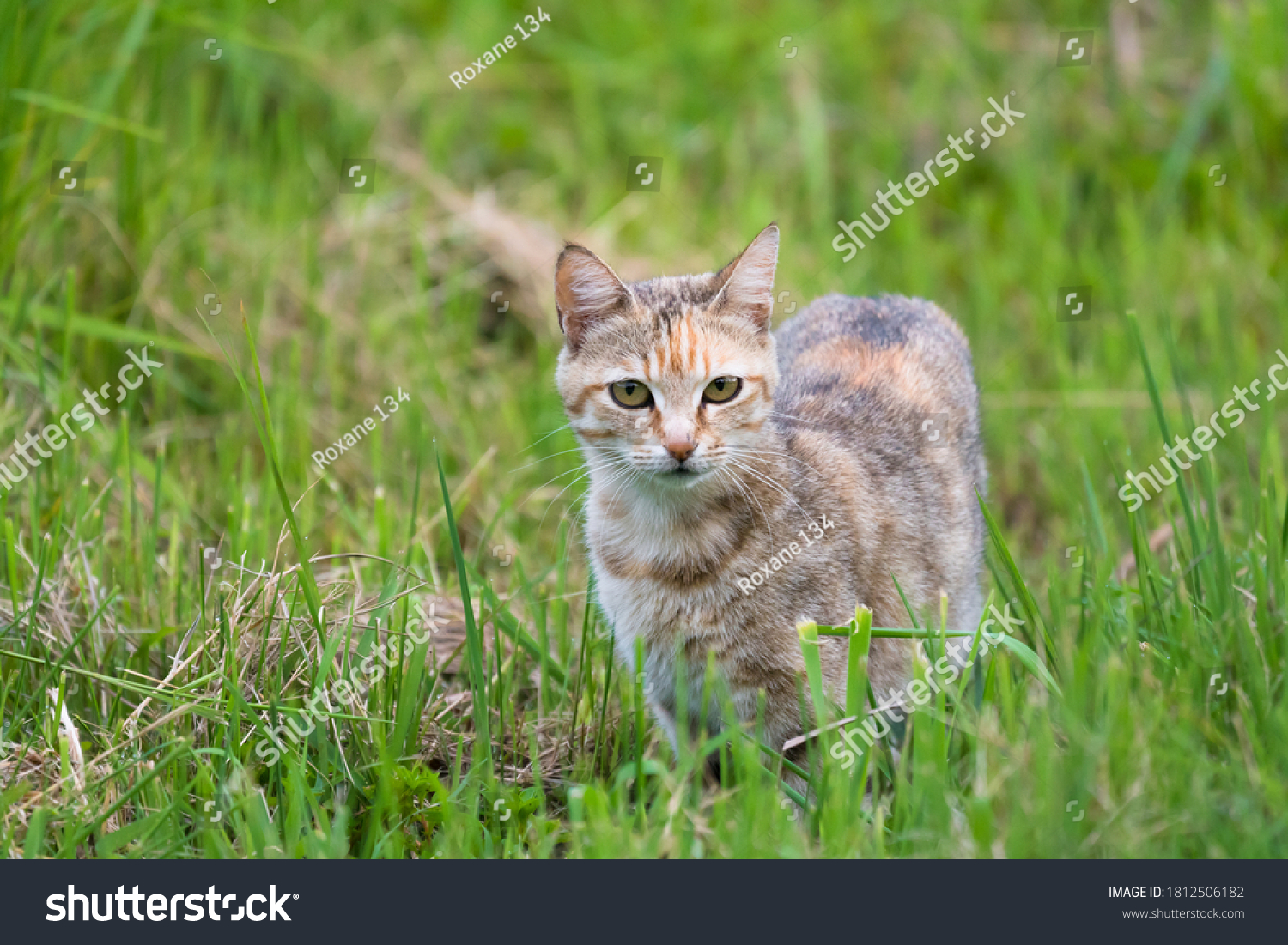 stock-photo-young-wild-feral-cat-in-gree
