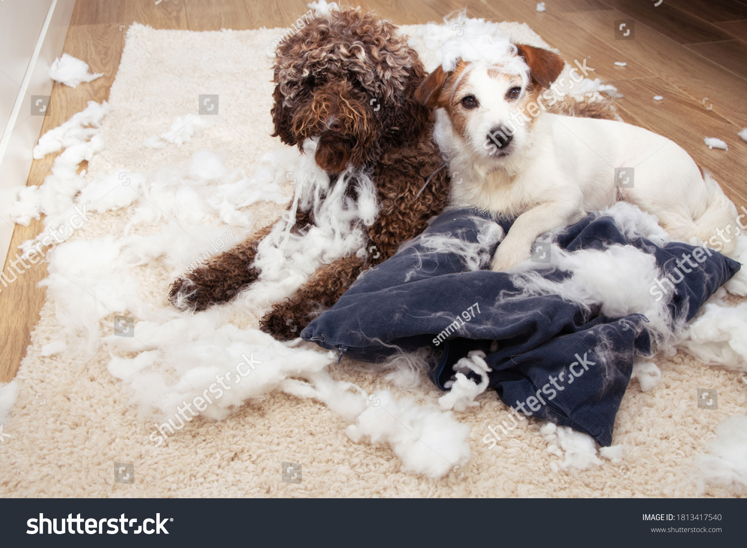 Dog mischief. Two dogs with innocent expression after destroy a pillow. separation anxiety and obedience training concept. #1813417540