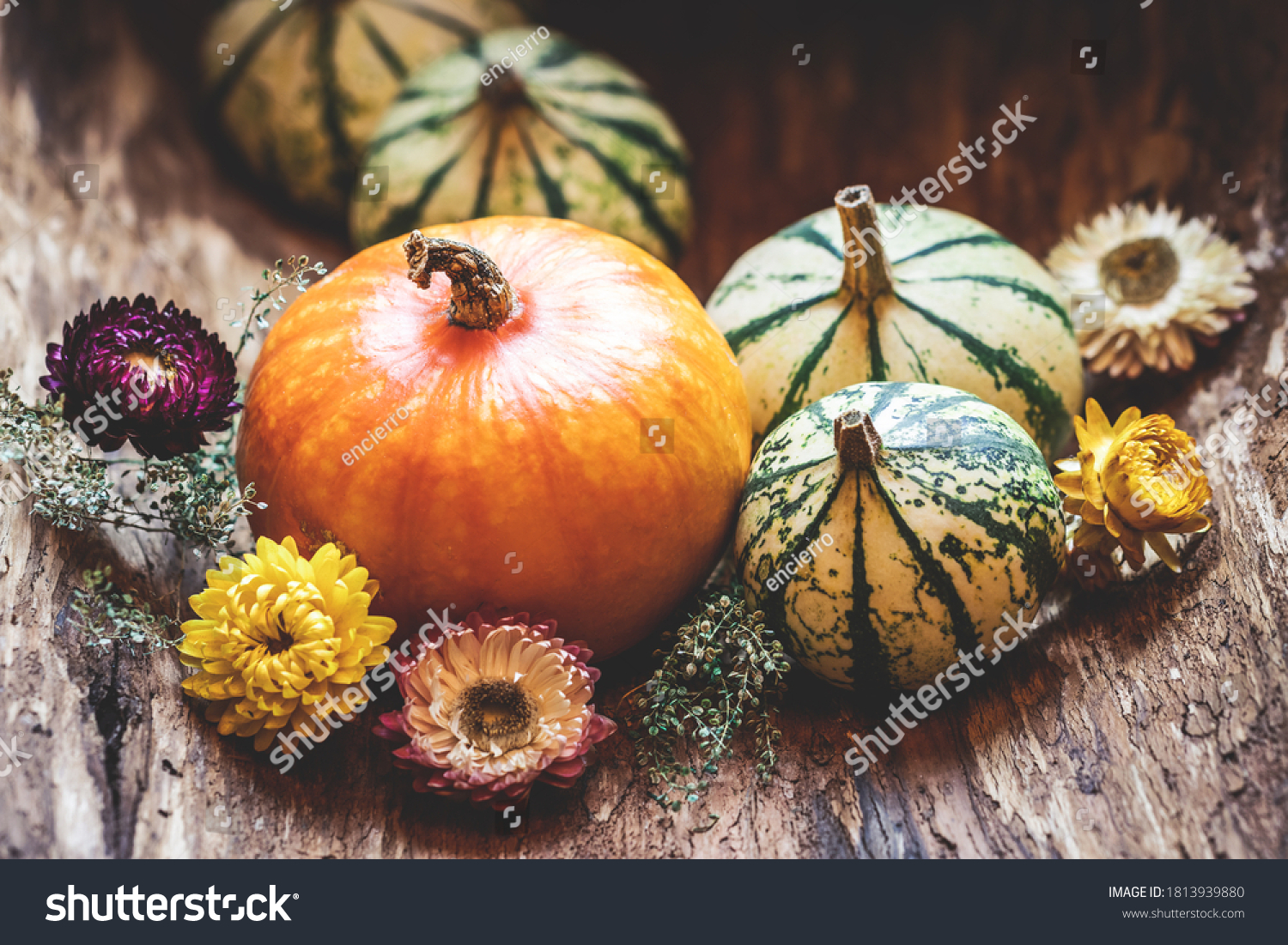 Pumpkins and dried flower. Thanksgiving day or halloween, autumn greeting background. Fall season still life concept #1813939880