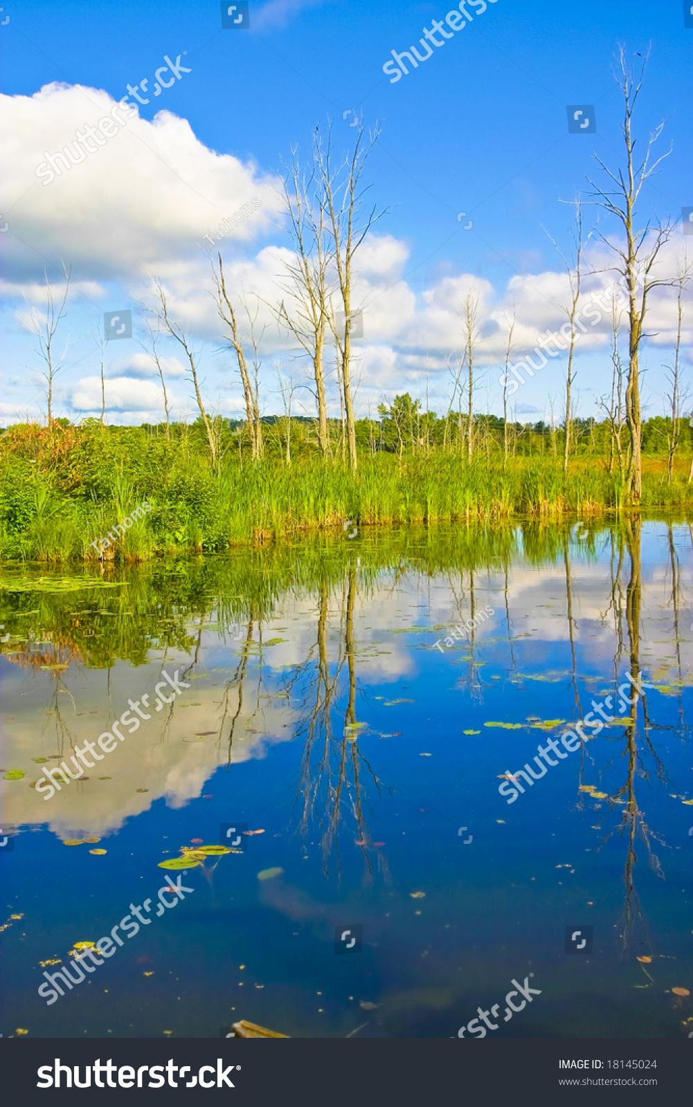 Sunny countryside landscape