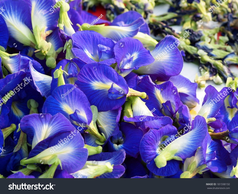 Violet Purple Color Flowers Butterfly Pea Stock Photo 181598150 - Shutterstock