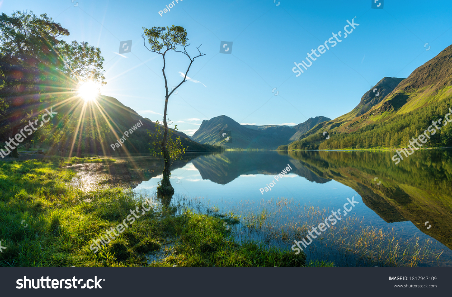 Lone tree and Buttermere lake at Sunrise. Lake District. England #1817947109