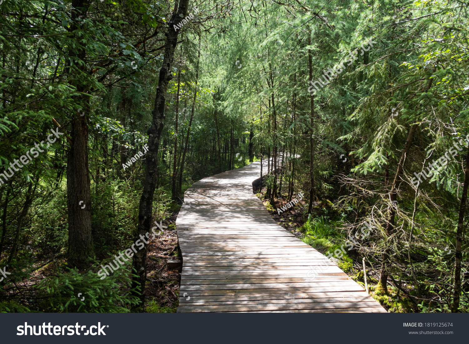 stock-photo-view-of-a-wooden-footpath-pa