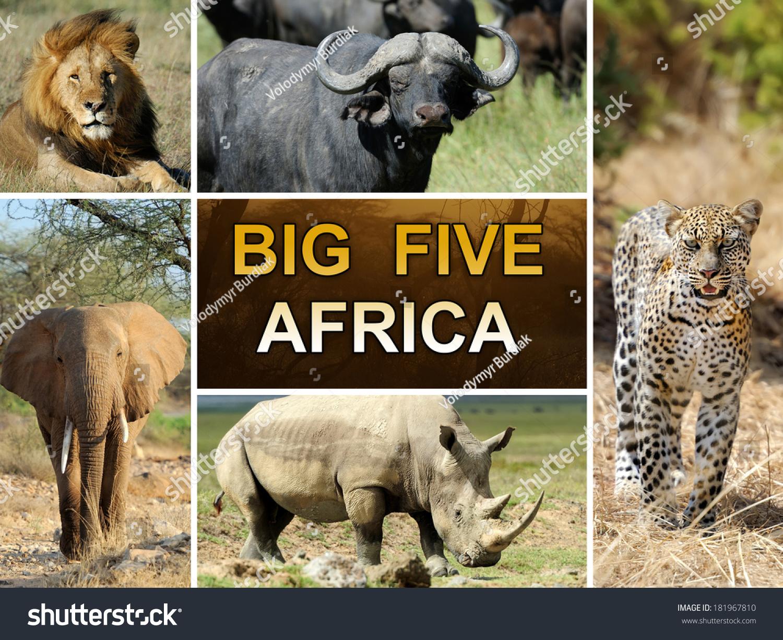 big five lion elephant leopard buffalo の写真素材 今すぐ編集
