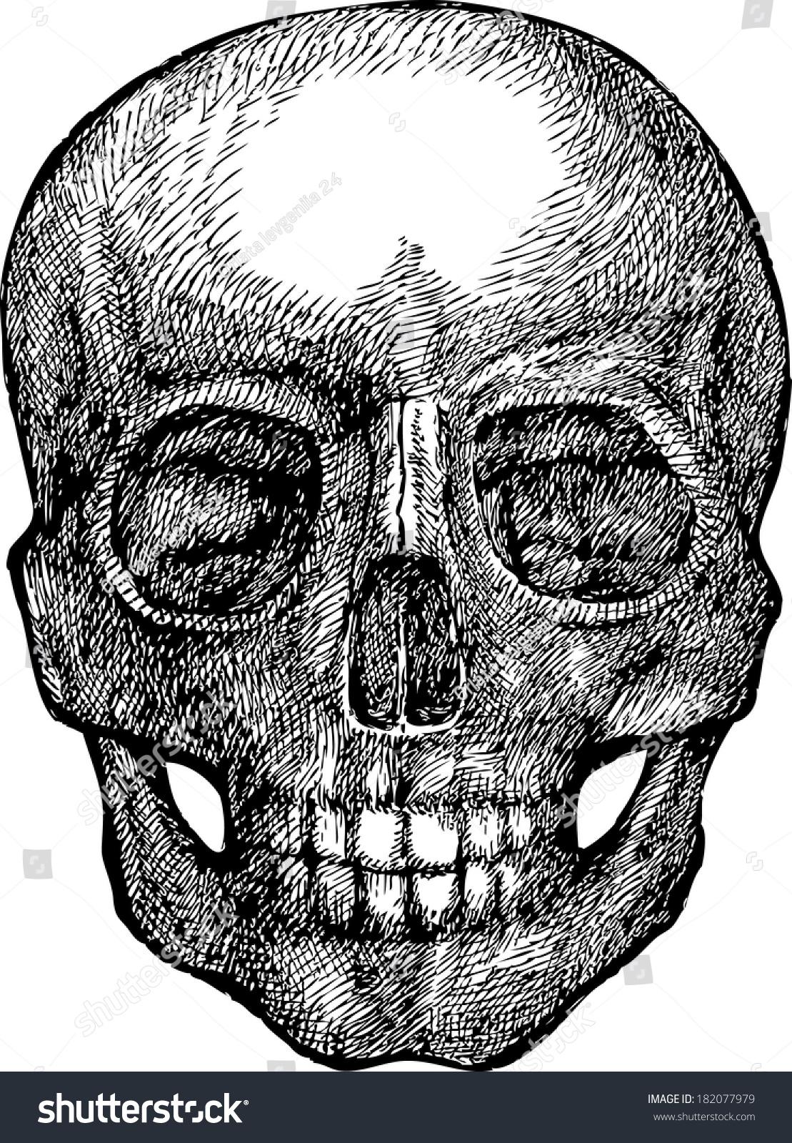 Skull Ink Human Skull Mystical Skull Stock Vector (Royalty Free ...