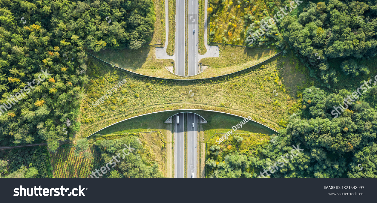 Aerial top down view of ecoduct or wildlife crossing - vegetation covered bridge over a motorway that allows wildlife to safely cross over #1821548093