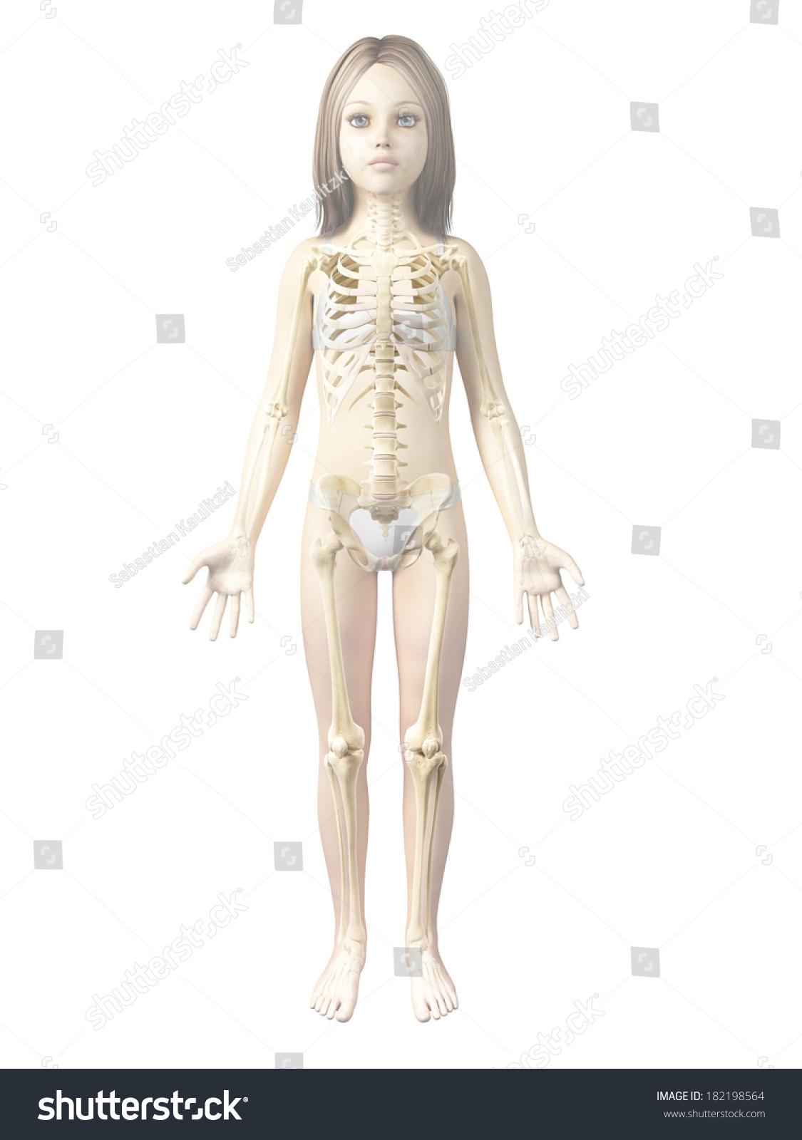 Anatomy Young Girl Skeleton Stock Illustration 182198564 Shutterstock